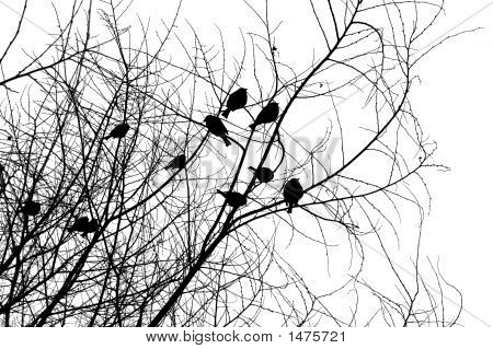 Birds_Silhouettes