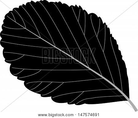 rowan leaf , rowan , illustration rowan leaf ,