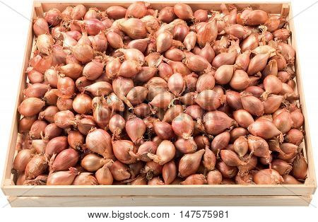Little Onion in a box background raw food vegetables