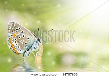 butterfly on flower  with reflection and fairy stars
