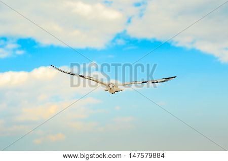 Seagull in the blue sky. Black Sea Coast.