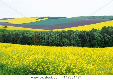 Agricultural land with colza and young wheat.
