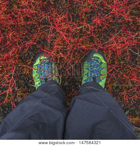 Hiking Boots Dove Into Tundra Plants At Iceland, Summer Time