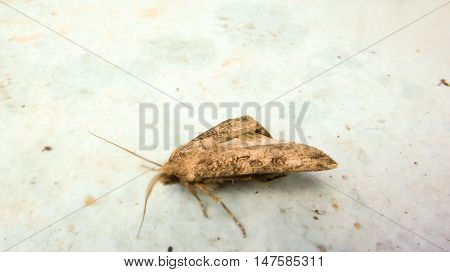 Picture of a insect Moth. animals theme