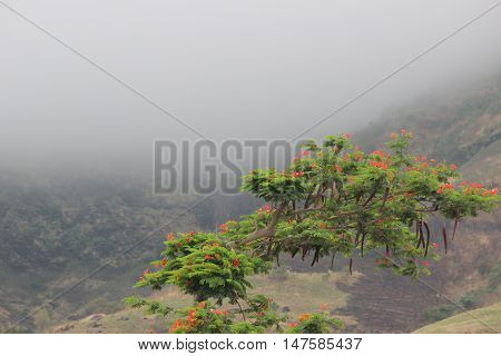 Beautiful green tree in front of a foggy landscape in Indian monsoon