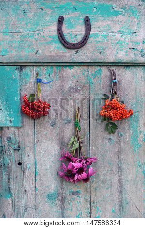 Bunches of herbs and berries with horseshoe hanging on old wooden door rustic blue background