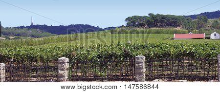 Grape Farm, Paarl, Western Cape South Africa 01d