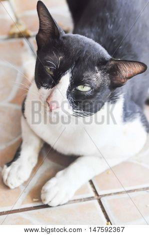 the sleepy cat on the floor , a cat