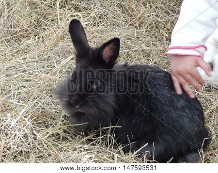 Rabbit in a cage on the straw for background