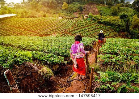 Young girl in Strawberry garden in Thailand