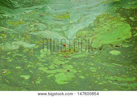 green algae patterns on the dirty water
