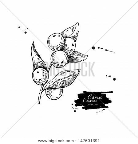 Camu camu vector superfood drawing. Isolated hand drawn  illustration on white background. Organic healthy food. Great for banner, poster, label