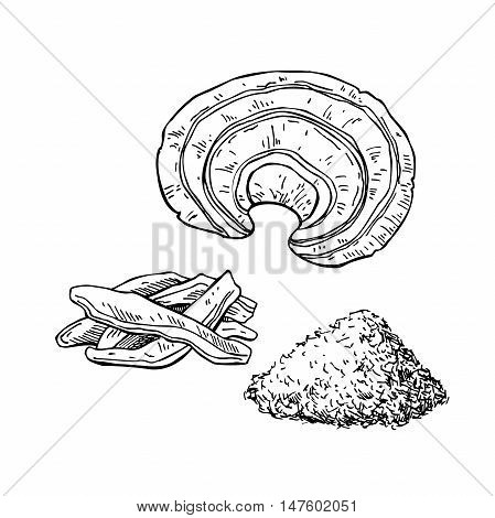 Reishi mushroom vector superfood drawing set. Isolated hand drawn illustration on white background. Reishi powder mushroom and sliced piece. Organic healthy food. Great for banner poster label