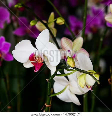White Orchid closeup in nature isolated on background