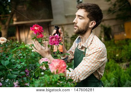 Young handsome gardener smiling, watering, taking care of flowers.