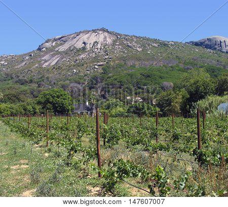 Grape Farm, Paarl, Western Cape South Africa 03a