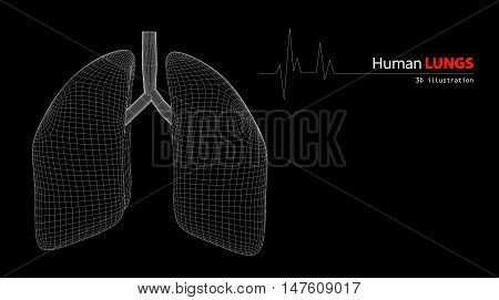 3d Illustration of Anatomy of Human Lungs