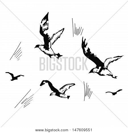 flying seagulls, hand drawn, vector illustration isolated over white background