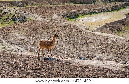 Fallow deer outdoors. Safari park in Spain