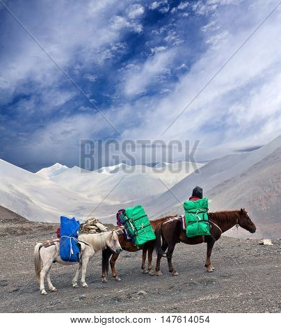 Three Horses with heavy load at the Sangda pass in Upper Dolpo region Nepal
