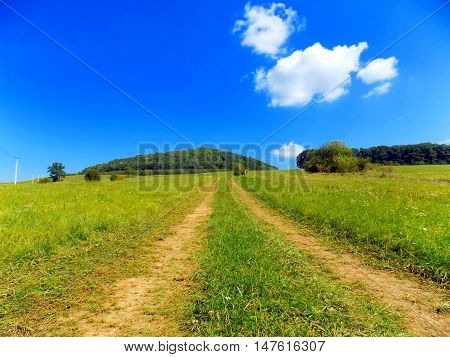 Road on meadow and deciduous forest in background in wild nature