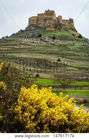 Medieval Castle In Gormas And Yelloow Flowers, Soria, Castilla Y Leon, Spain