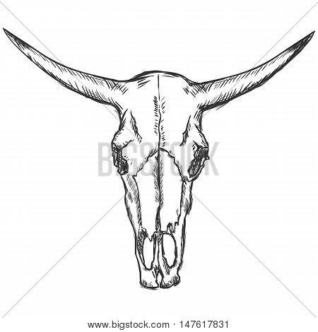 Vector Sketch Old Cow Skull