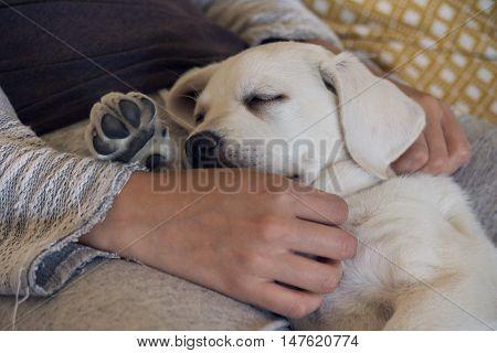 cute little dog puppy sleeping on a woman