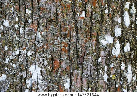 Tree bark texture. Tree bark background. Nature.