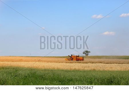 Old combine collects the mature grain in the countryside on a hot day