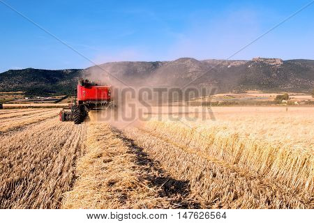 Wheat Field In Apulia In A Sunny Day With A Combine Harvester In Action