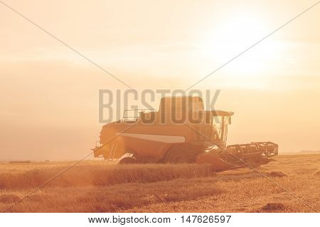 Wheat Field At Sunset In Backlight With A Combine Harvester In Action