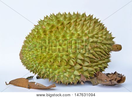 durian tropical summer fruit on white background