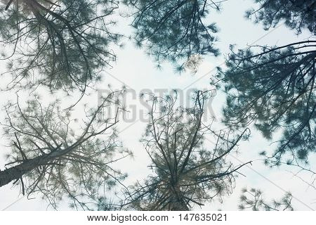Trees against sky, view from below