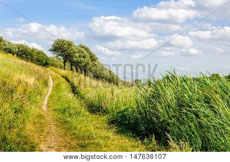 Narrow and sandy footpath up in a rural setting with reeds grass and trees. It's a sunny day in the summer season.