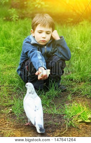 little kind boy feed white pigeon close up country sunny photo
