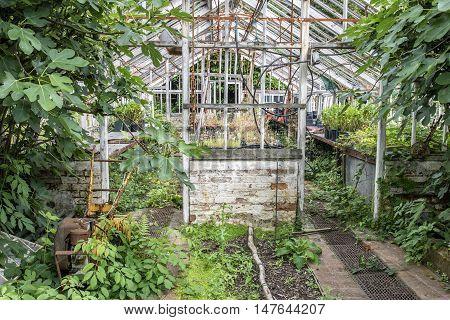 Stunning Vintage Victorian Era Greenhouse Left Ro Ruin In Old English Garden