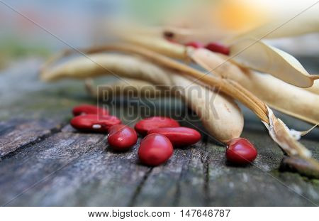 crop and beans red beans on a wooden surface