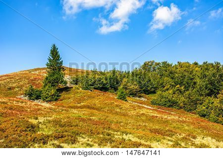 Spruce Tree On A Mountain Slope