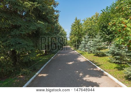 park with coniferous and deciduous trees and an asphalt road