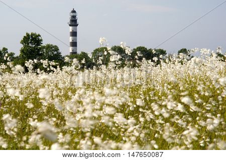 Lighthouse in the Baltic Sea. View from the flowery meadow natural environment. Osmussaar Estonia Europe.