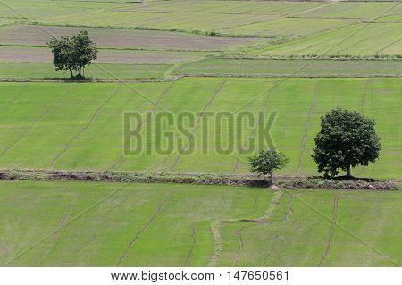 Rural farmland to grow rice in Kanchanaburi at Thailand.
