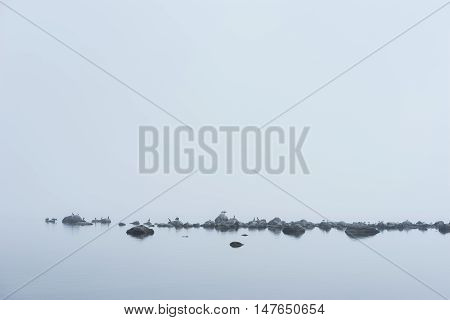 Rocky beach great black cormorant seagulls and morning fog in summer. Sea mist birds coast seaside natural environment. Phalacrocorax carbo on the shore Koipsi Island Estonia Europe.
