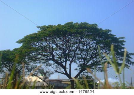 Arc'S Tree