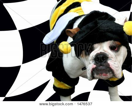 Speedy Bee Bulldog