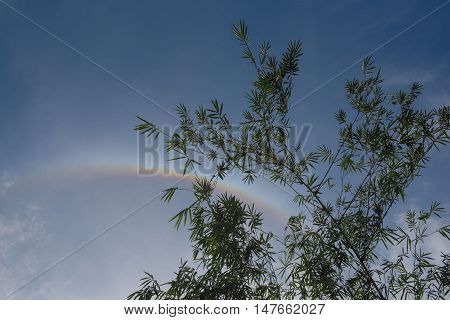 Bamboo tree leaf  and clouds and the blue sky