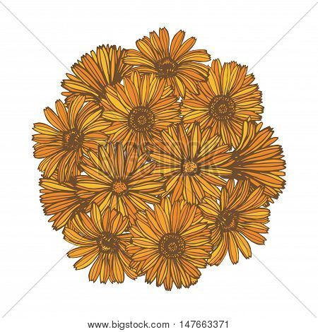 vector hand drawn composition with calendula flowers