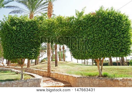 Topiary trees in the garden on a luxury resort