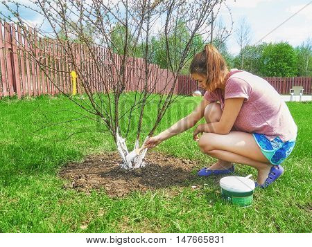 She whitens the trees. Protection bark. In the summer of town