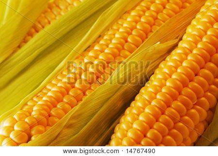 Freshly harvested corn, close up.